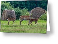 Deer In A Hay Field Greeting Card