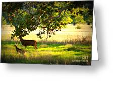 Deer In Autumn Meadow - Digital Painting Greeting Card