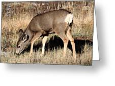 Deer In Bryce Canyon National Park Greeting Card