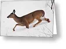 Deer In Deep Snow Greeting Card