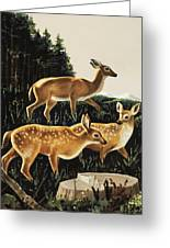 Deer In Forest Clearing Greeting Card