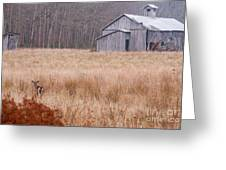 Deer In Hiding Greeting Card