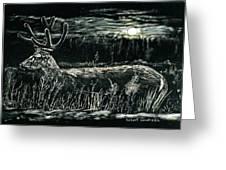 Deer In Moonlight Greeting Card