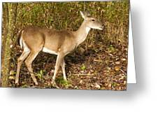 Deer In Morning Ligh Greeting Card