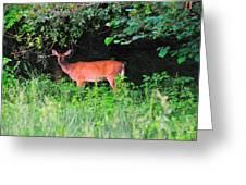 Deer In Overhang Of Trees Greeting Card