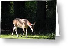 Deer In Shadows Greeting Card