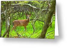 Deer In Shanendoah Mountains Greeting Card