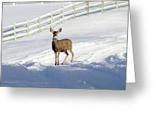 Deer In Snow Covered Road Greeting Card