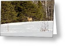 Deer In The Distance Greeting Card