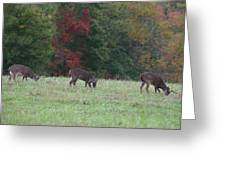 Deer In The Fall Greeting Card