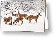 Deer In The Snow 2 Greeting Card