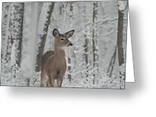 Deer In The Snow Greeting Card