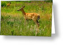 Deer In The Wild Greeting Card