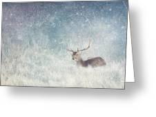 Deer In Winter Scene Greeting Card