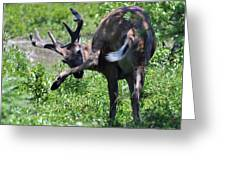 Deer Itch 2 Greeting Card