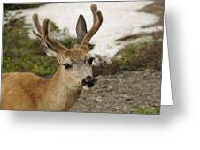 Deer Iv Greeting Card