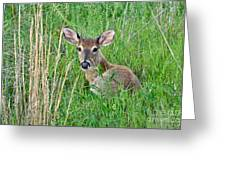 Deer Laying In Grass Greeting Card