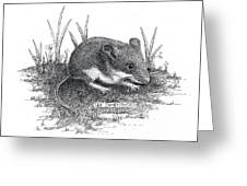 Deer Mouse Greeting Card