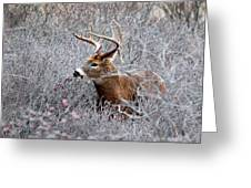 Deer On A Frosty Morning  Greeting Card