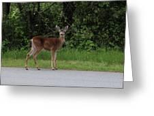 Deer On Road Greeting Card