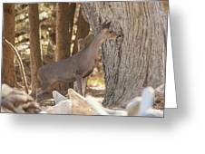 Deer On The Look Out Greeting Card