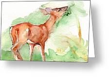 Deer Painting In Watercolor Greeting Card