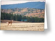 Deer Poses In The Fall Greeting Card
