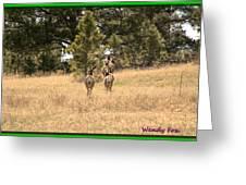 Deer Tails Greeting Card