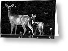 Deer Tracks Greeting Card