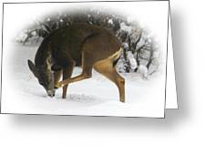 Deer With An Itch Greeting Card