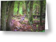 Deer1 Greeting Card