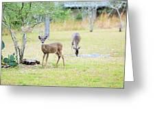Deer18 Greeting Card