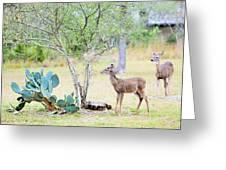 Deer19 Greeting Card