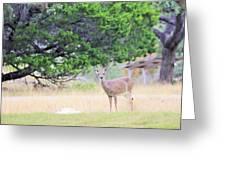 Deer21 Greeting Card