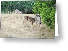 Deer24 Greeting Card
