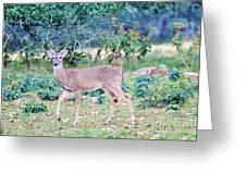 Deer42 Greeting Card