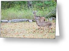 Deer47 Greeting Card