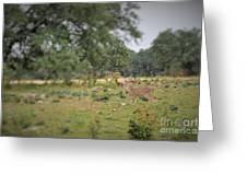 Deer48 Greeting Card