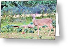 Deer50 Greeting Card
