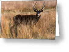 Deers Attention Greeting Card