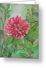 Dahlia Flower Grown In Apartment Garden Greeting Card