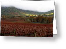Del Rio Vineyard Greeting Card