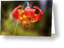 Delicate Beauty Greeting Card