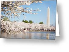 Delicate Blossoms Over The Tidal Basin Greeting Card