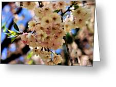 Delicate Blossoms Greeting Card