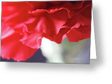 Delicate Carnation  Greeting Card