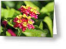Delicate Cluster Greeting Card