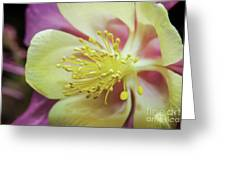 Delicate Columbine Nature Photograph Greeting Card