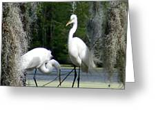 Delicate Egret Romance Greeting Card