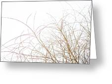 Delicate January Tree Branches Greeting Card